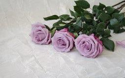 玫瑰灰色,淡紫色,种类 图库摄影