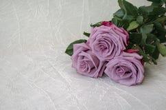 玫瑰灰色,淡紫色,种类 免版税库存照片