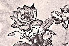 玫瑰的剪影作用 免版税库存图片
