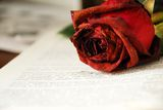 玫瑰的图象在书的 免版税库存照片