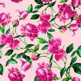 玫瑰的无缝的样式在水彩的 皇族释放例证