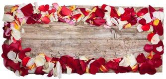 玫瑰的瓣在桌木顶视图的全景在白色 库存图片