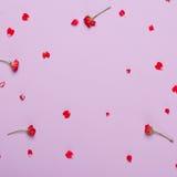 玫瑰的红色瓣在紫色背景的 免版税库存照片