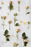 从玫瑰的背景 免版税库存照片