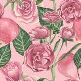 玫瑰的花和芽的水彩样式 库存图片图片