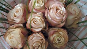 玫瑰米黄桃红色花束  库存图片