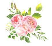 玫瑰精美水彩花束  图库摄影