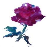 玫瑰红水彩艺术背景五颜六色的花 免版税图库摄影
