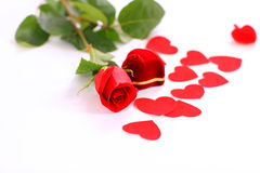 玫瑰背景 免版税库存照片