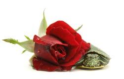 玫瑰色乌龟 免版税库存图片