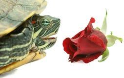 玫瑰色乌龟 免版税库存照片