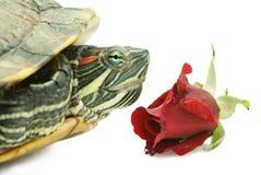 玫瑰色乌龟 库存照片