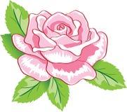 玫瑰色向量 皇族释放例证