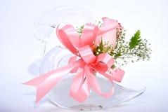 玫瑰色天鹅 免版税库存图片