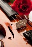 玫瑰色小提琴 库存照片