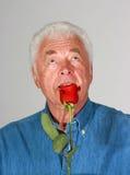 玫瑰色气味 库存图片
