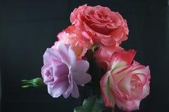 玫瑰色波西 库存照片