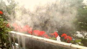 玫瑰色烟 库存照片
