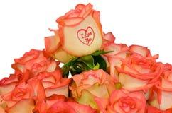 玫瑰色玫瑰 库存照片