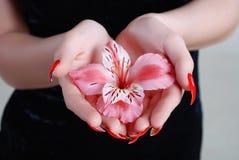 玫瑰色的兰花 免版税库存照片