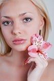 玫瑰色的兰花 库存图片