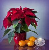 玫瑰色的冬天,蜜桔和蜡烛 库存图片