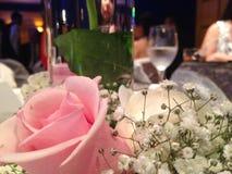 玫瑰色的徒升和planta白色 免版税库存照片
