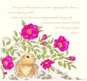 玫瑰色的狗和地鼠 库存照片
