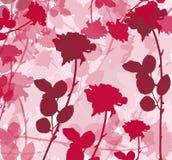 玫瑰色的背景 库存图片