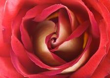 玫瑰色纹理 图库摄影