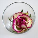 玫瑰色花瓶 库存图片