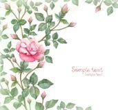 玫瑰色花的水彩例证 图库摄影