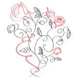 玫瑰色草图 库存图片