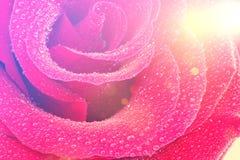 玫瑰色葡萄酒 免版税库存照片