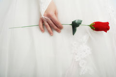 玫瑰色w 库存照片