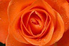 玫瑰色waterdrops 免版税库存照片