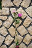 玫瑰花圃 库存照片