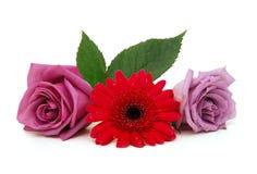 玫瑰花束和雏菊花 图库摄影