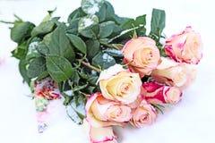 玫瑰花束在雪的 免版税库存照片