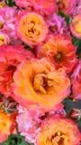 玫瑰花束在黄色花瓶的 库存图片
