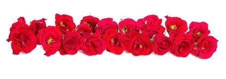 玫瑰花束被安排对一个边界或设计元素的形式花卉题材的 免版税图库摄影