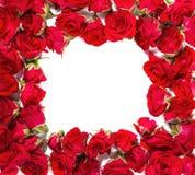 玫瑰花束被安排形成框架或设计花卉题材的元素 图库摄影