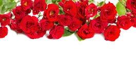 玫瑰花束-花卉题材的元素 免版税库存图片