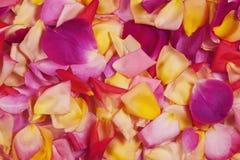 玫瑰花瓣。 抽象花卉背景。 图库摄影