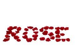 玫瑰花瓣使玫瑰色 免版税图库摄影