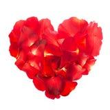 玫瑰花瓣在心脏形状被计划 免版税库存照片