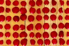 玫瑰花瓣在样式安排了 库存照片