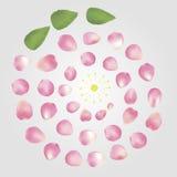 玫瑰花瓣构成 免版税库存照片