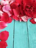 玫瑰花瓣红色在木背景,生日贺卡 免版税库存照片