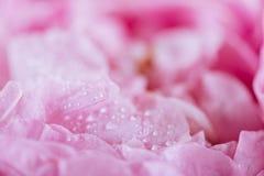 玫瑰花瓣背景图象的桃红色甜点细节  免版税库存照片